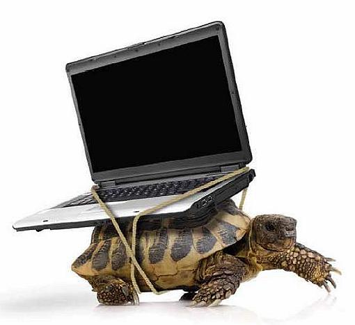 blogging-turtle.jpg
